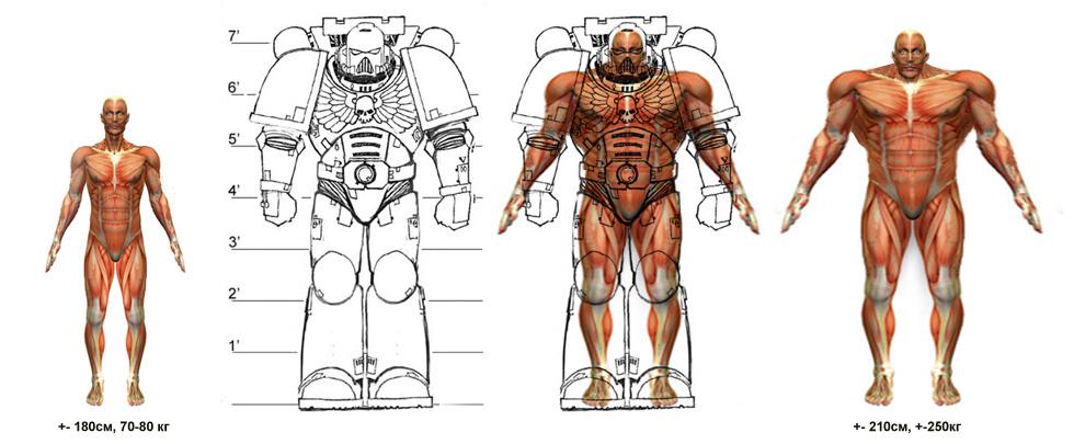 Схема анатомия спейсмарина